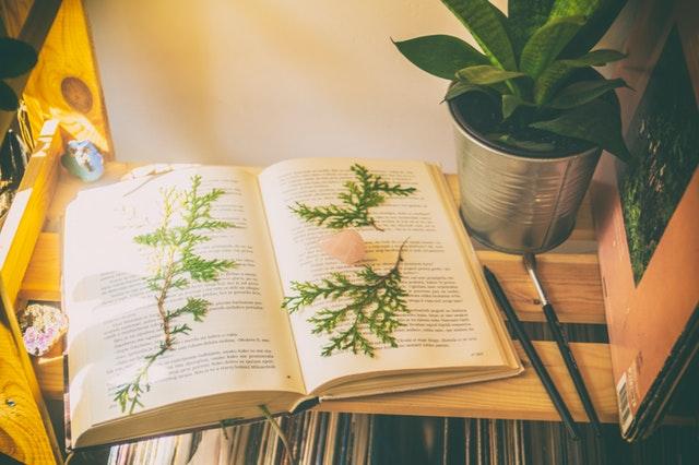 Gröna blad på en bok